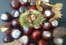 Calendario de verduras y frutas de temporada. Enero