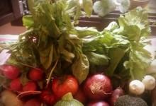 Calendario de frutas y verduras.  Julio