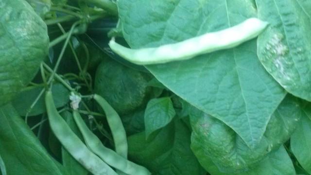 Calendario de frutas y verduras septiembre