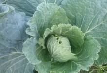 Calendario de verduras y frutas de temporada. Febrero